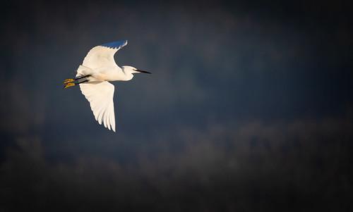 Vol au dessus d'un ... marais