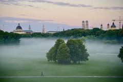 Morning walk in the mist