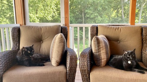 An afternoon in the porch...