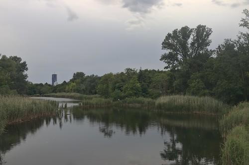 2017-06-17 AT Wien 22 Donaustadt, Unteres Mühlwasser @ Kanalbrücke
