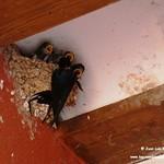 Aves en el Paseo del Norte de La Guardia (Toledo) 13-7-2020