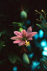 Flower on Kauai (4)