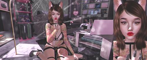 【kitten】
