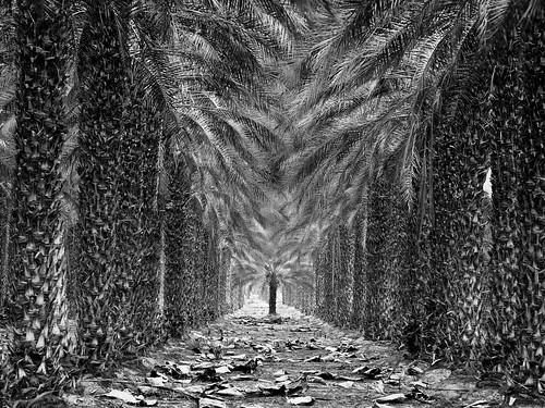 Natural Tunnel - Palm Trees Impression, California