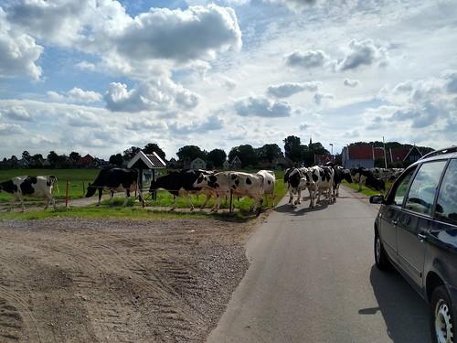 Przemarsz / Cowwalk