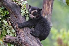 Uyuni hugging a tree!