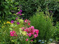 In unserem Garten - In our garden