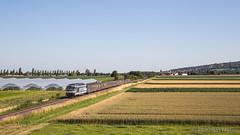 230620 | SNCF 67512 + 222/306 | TER 831753 | Dorlisheim.