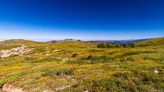 Le plateau du Cuscione-07