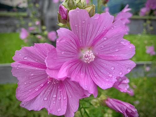 Flower Power 🌸