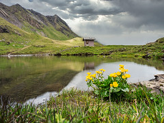 Mountain lake with wild flowers