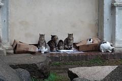 Cats @ Castello Sforzesco @ Milan
