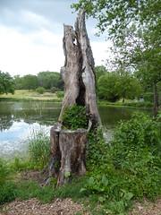 Morton Arboretum 2020