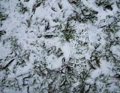 Step Of Winter