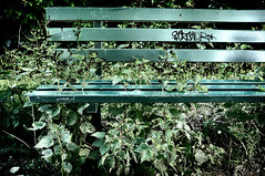 The Naughty Bench