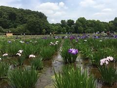 Kitayama Park in Higashimurayama-shi 67