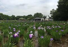 Kitayama Park in Higashimurayama-shi 66