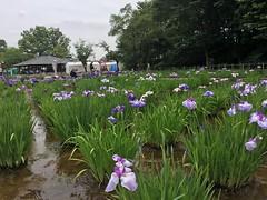 Kitayama Park in Higashimurayama-shi 65