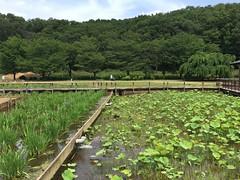 Kitayama Park in Higashimurayama-shi 62