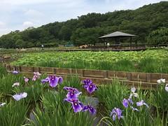 Kitayama Park in Higashimurayama-shi 59