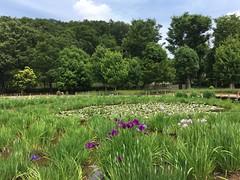 Kitayama Park in Higashimurayama-shi 56