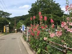 Kitayama Park in Higashimurayama-shi 36