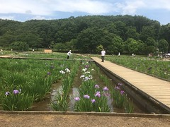Kitayama Park in Higashimurayama-shi 18