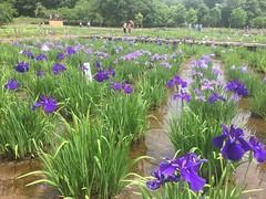 Kitayama Park in Higashimurayama-shi 11