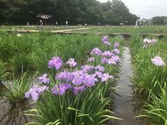 Kitayama Park in Higashimurayama-shi 6
