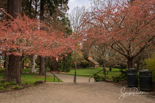 Lewis and Clark College