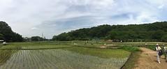 Kitayama Park in Higashimurayama-shi 63