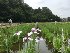 Kitayama Park in Higashimurayama-shi 60