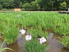 Kitayama Park in Higashimurayama-shi 58