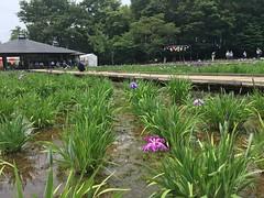 Kitayama Park in Higashimurayama-shi 55