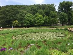 Kitayama Park in Higashimurayama-shi 54