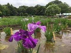 Kitayama Park in Higashimurayama-shi 53