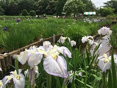 Kitayama Park in Higashimurayama-shi 52