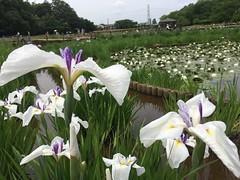 Kitayama Park in Higashimurayama-shi 51