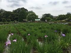 Kitayama Park in Higashimurayama-shi 48