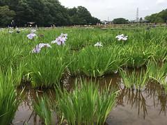 Kitayama Park in Higashimurayama-shi 47