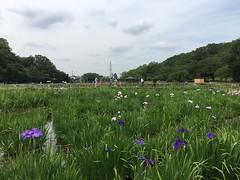 Kitayama Park in Higashimurayama-shi 43
