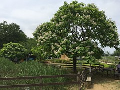 Kitayama Park in Higashimurayama-shi 41