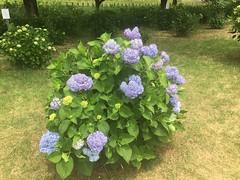 Kitayama Park in Higashimurayama-shi 29