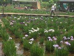 Kitayama Park in Higashimurayama-shi 13