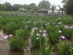 Kitayama Park in Higashimurayama-shi 10