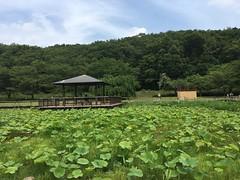 Kitayama Park in Higashimurayama-shi 61