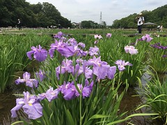 Kitayama Park in Higashimurayama-shi 57