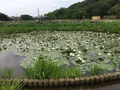 Kitayama Park in Higashimurayama-shi 49