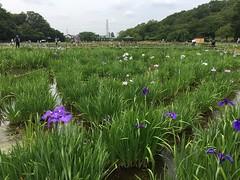 Kitayama Park in Higashimurayama-shi 46