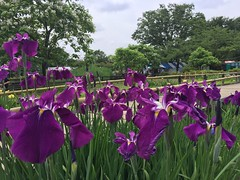 Kitayama Park in Higashimurayama-shi 45